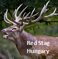 https://wildjaeger.com/wp-content/uploads/2019/05/REd-Stag-Widget-01.jpg