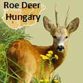 https://wildjaeger.com/wp-content/uploads/2019/05/Roe-Deer-Hungary-widget-91.png