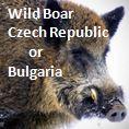 https://wildjaeger.com/wp-content/uploads/2019/05/Wild-boar-widget-01.jpg