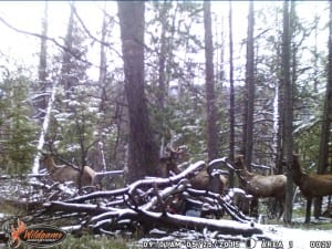 Spring Black Bear Hunting in Wyoming